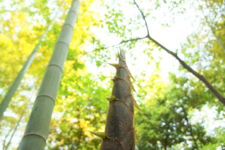 0640-0425竹の子 (3).jpg